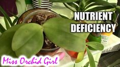 Nutrient deficiency in orchids