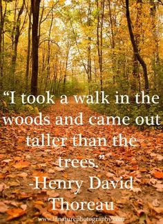 nature quotes henry david thoreau walden image quotes, nature quotes henry david thoreau walden quotations, nature quotes henry david thoreau walden quotes and saying, inspiring quote pictures, quote pictures Into The Woods Quotes, Walk In The Woods, Lost In The Woods, Quotes About Photography, Nature Photography, Photography Composition, Photography Tips, Camping Photography, Mountain Photography