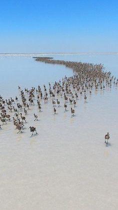 Salt lake TURKEY Free Travel, Travel And Leisure, Bronze Age Civilization, Visit Turkey, Oregon, Bird Pictures, Istanbul Turkey, Tropical, Asia