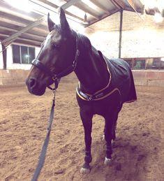 Harrys Horse Rijlaars Champ wijd