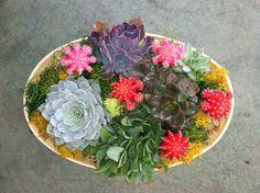 images about potted plants on Pinterest Succulents