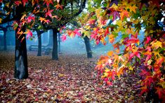 In this wonderful picture we can see the colors of autumn. nature is fantastic and this photograph shows it.