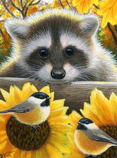 SUNFLOWER FRIENDS II - Little Rafaella has discovered some new friends among the bright sunflowers in the fall garden. Raccoon Art, Cute Raccoon, Racoon, Baby Animals, Cute Animals, Curious Creatures, Paws And Claws, Cute Animal Drawings, Cute Bears
