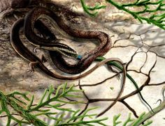 Four-Legged Snake Fossil Found in Museum ||| Answers In Genesis