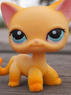 Brooklyn from lps popular what is she doing here What do you people think