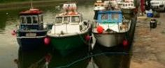 The Gathering - The Gathering Ireland 2013 - Westport Sea Angling Festival Sea Angling, The Gathering, Ireland, Sports, Food, Hs Sports, Saltwater Fishing, Sport, Essen