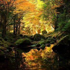 Autumn River, Japan