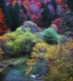 The Irati Forest, Navarra Spain