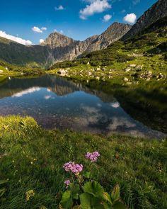 High Tatras (Ťatliakovo pleso tarn), Slovakia High Tatras, Wild Flowers, Travel Inspiration, Travelling, Flora, Beautiful Places, Places To Visit, Bucket, Ceiling