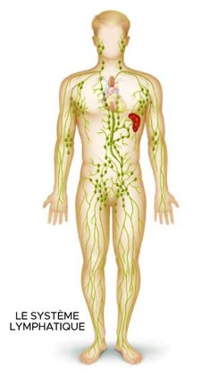 How to drain your lymphatic fluids by doing a lymphatic detox. These warning signs tell you if you need to drain your lymphatic fluids. Lymphatic Detox, Lymphatic Drainage Massage, Ayurveda, Swollen Lymph Nodes, Danger Signs, Lymph Fluid, Dry Brushing Skin, Cancer Fighting Foods, Biology