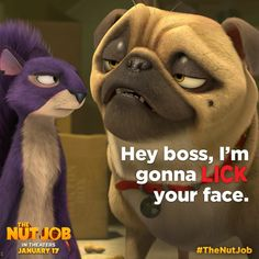 """How could you say """"no"""" to a face like that? See Precious the Pug in #TheNutJob on January 17! >>  http://www.fandango.com/thenutjob_168664/movietimes"""