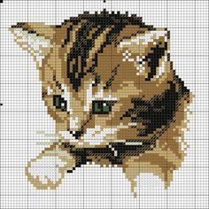 Gallery.ru / Фото #2 - CATS 5 - KIM-2