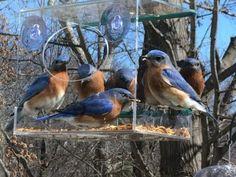 9 Tips to Squirrel Proof Your Bird Feeder  #birdfeeder #squirrel proof