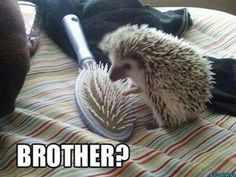 Awwwwww I love hedgehogs they are so cute
