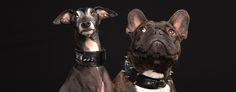 Rambo & Adele #pjays#dog#iggy#greyhound#cute#cutedog#dogcollar#frenchbulldog