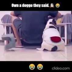 Animal Jokes, Funny Animal Memes, Funny Animal Pictures, Funny Dogs, Cute Dogs, Funny Laugh, Haha Funny, Stupid Funny, Funny Cute