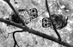 If only I could have all the super cute owls in the world...