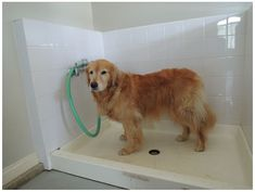 (paid link) Dog Bathing will get you Bathing your best friends in astounding dog tubs in no time! #dogbathingstation Shower Basin, Dog Shower, Dog Bathing Station, Cheap Dog Houses, Diy Dog Wash, Cheap Dog Kennels, Dog Grooming Tips, Utility Sink, Planners