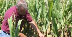 CROP INSURANCE IN ACTION: Tim Totheroh, Wellington, Illinois