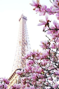 There are locations where you'll always find spring blossom in Paris. The Eiffel Tower Notre Dame are just a few spots that spring to mind…