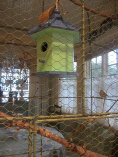 Finch cage with painted bird house