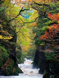 The Fairy Glen Gorge on the river Conwy, Wales. Why didn't I see this in Conwy? Foto Nature, All Nature, Amazing Nature, Places To Travel, Places To See, Beautiful World, Beautiful Places, Trees Beautiful, Amazing Places