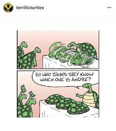 Turtles have Shells. They live long lives. They therefore have a lot of time to get very skilled at Shell Games. Cute Turtles, Baby Turtles, Sea Turtles, World Turtle Day, Turtle Time, Turtle Quotes, Dog Jokes, Funny Minion Memes, Tortoise Turtle