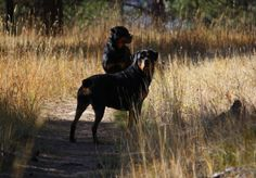 Rottweilers on the trail