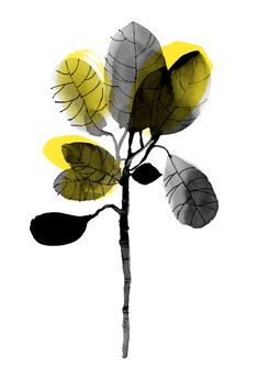 ORGANIC Illustrations, Reproduction, Plant Leaves, Sketches, Organic, Drawings, Plants, Illustration, Plant