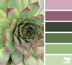 Succulent hues - for the bedroom