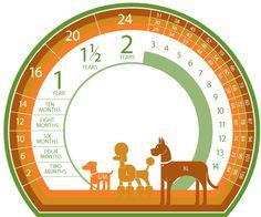 Tabela comparativa de idade entre cães e humanos.