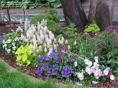 Tiarella 'Iron Butterfly' with Viola, Pulmonaria, and Heuchera; photo by ms_greenjeans at Dave's Garden