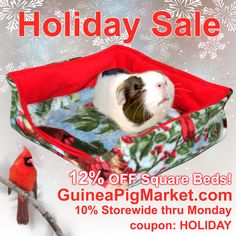 Fleece bedding, cozies, and more! www.GuineaPigMarket.com