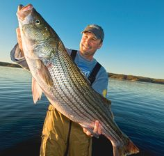 Never Lose Another Striped Bass