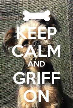 Griff On Pet Dogs, Dog Cat, Pets, I Love Dogs, Puppy Love, Griffon Bruxellois, Dog Health Tips, Brussels Griffon