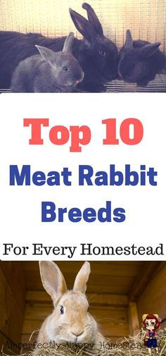 The Top 10 Meat Rabbit Breeds for Every Homestead. A great urban livestock too. Meat Rabbits Breeds, Raising Rabbits For Meat, Rabbit Breeds, Backyard Farming, Chickens Backyard, Rabbit Farm, Future Farms, Rabbit Hutches, Hobby Farms