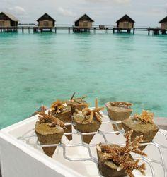 Maldives. wooooooow
