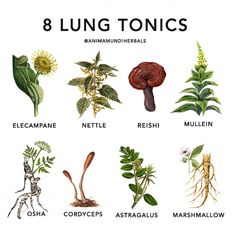 Magic Herbs, Plant Magic, Herbal Magic, Healing Herbs, Medicinal Plants, Natural Healing, Natural Health Remedies, Herbal Remedies, Herbal Tinctures