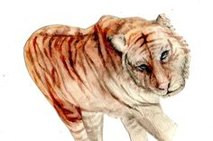 Tiger with watercolor #art #artist #artwork #watercolor #animals #drawing