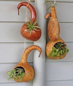 Succulents in Gourds! Decorative Gourds, Hand Painted Gourds, Garden Crafts, Garden Art, Diy And Crafts, Arts And Crafts, Gourds Birdhouse, Gourd Art, Nature Crafts