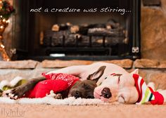 The Lazy Pit Bull: Not Even A... Pittie? - http://www.thelazypitbull.com/2012/12/not-even-pittie.html