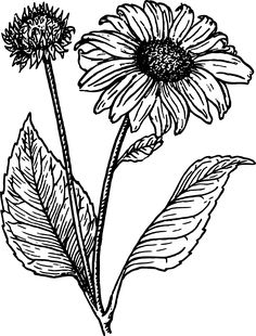 20+ Sunflower Drawing Ideas For Beginners