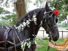 wisteria and rose for this shiny smart horse
