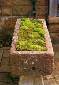 Moss Making Recipe: 2 cups buttermilk or plain yogurt 1 - 1 cups of chopped-up moss (Fresh or Dried) by beatrice Garden Inspiration, Garden Containers, Plants, Miniature Garden, Moss Garden, Outdoor Gardens, Growing Moss, Garden Landscaping, Garden Projects