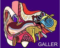 50% de descuento arte moderno anatomía por HeatherGallerArt