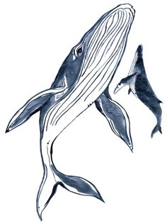 Whale Art Garments for Good: 7 Reasons We Love Whales We're bringing awareness to these majestic marine mammals with a special collection of tees and accessories (plus, our favorite way-cool whale facts). Read more here. Animal Drawings, Art Drawings, Sketches Of Animals, Whale Sketch, Whale Illustration, Whale Tattoos, Blue Whale Drawing, Arte Sketchbook, Whales