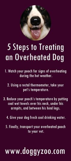 5 Steps to Treating an Overheated Dog