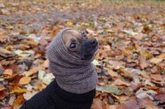 ALL BREED dog hoodie cowl neck warmer natural grey by care4dogs, €10.00