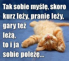 Weekend Humor, Good Sentences, Cute Funny Dogs, Judo, Funny Moments, Motto, Cheerleading, Animals And Pets, Hani