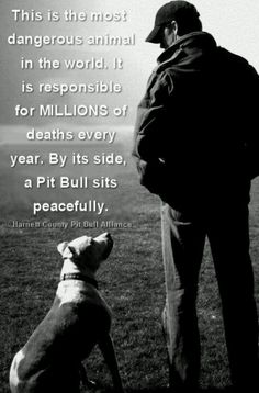 a Pitbull should not take the blame for a humans actions and suffer death,and the human don't care one bit! save the pitbull